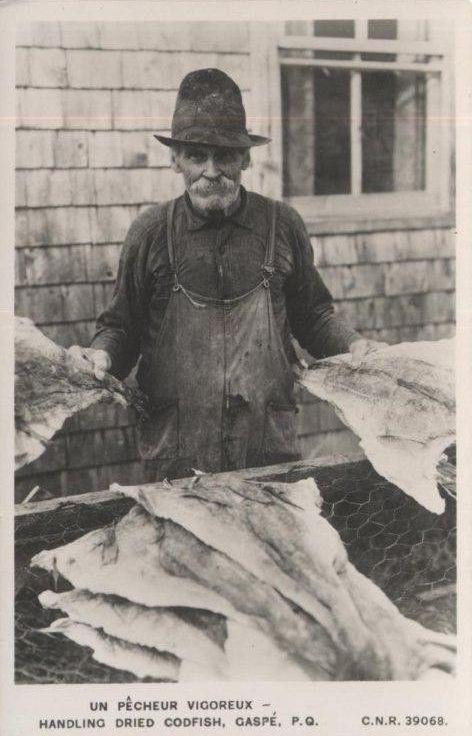 Handling dried codfish, Gaspé. (Early photographic postcard. Photo - CNR Photo)